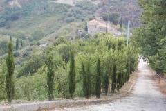 La via dei cipressi