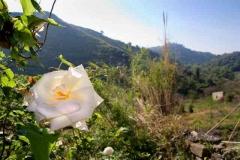 borgo_2007016